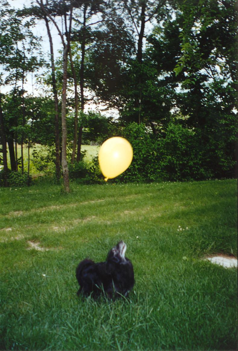 Il cane Pippo (indefesso guardiano del Borgo Valentini) in un momento di relax.