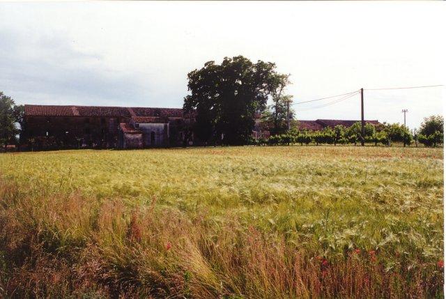Un'altra veduta del Palazzone e della quercia. Il Palazzone, la cui struttura più antica risale al XVI secolo, è la sede dell'azienda agricola Romanin-Jacur.