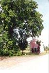 Il famoso oratorio cinquecentesco della Madonna Immacolata, all'ombra della quercia centenaria; fra i rami di essa è collocato un capitello rustico dedicato a S. Antonio.