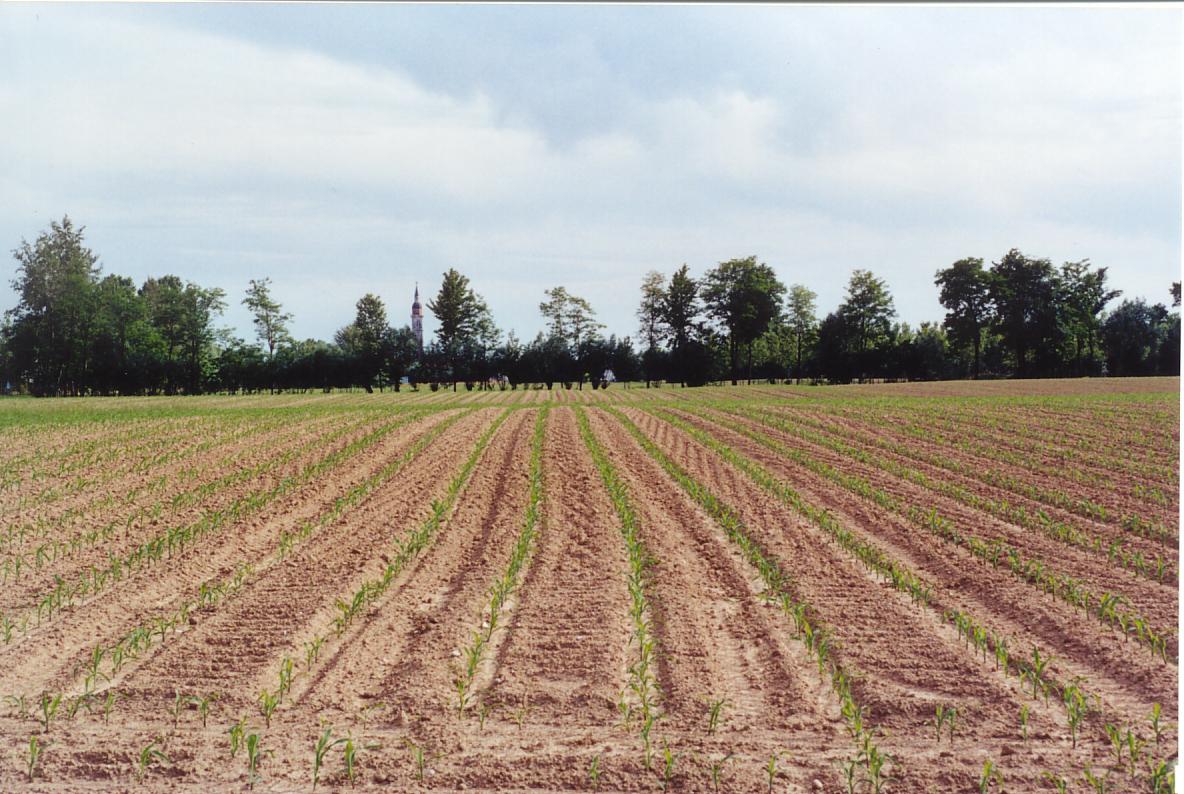 Il campanile di Salzano visto da via Frusta. Si notino i caratteristici campi baulati (a schiena d'asino) tipici della campagna veneta. Purtroppo, ultimamente, molti contadini procedono alla livellazione dei terreni ignorando l'utilità delle pendenze nei terreni.