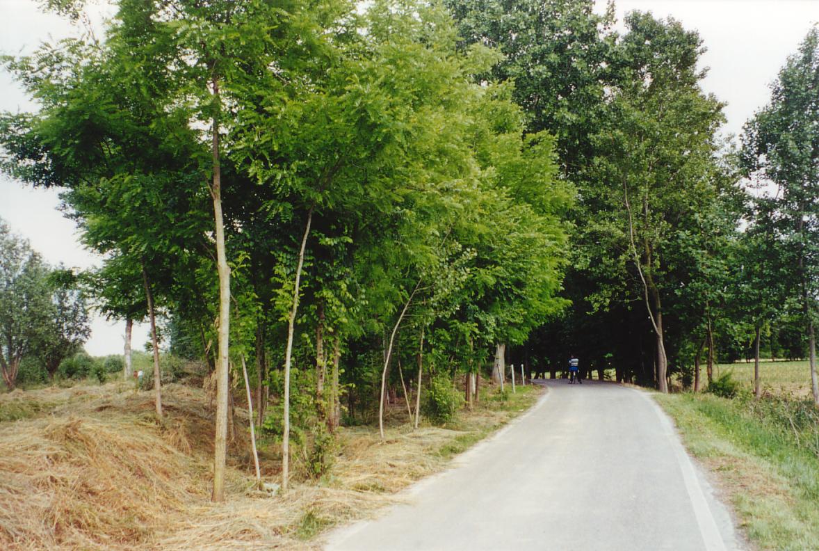 Un'altra veduta di via Toscanigo.