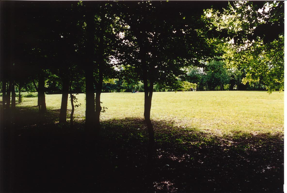 """Il parco di Villa Romanin-Jacur, opera di Luigi Garzoni (1854): """"Prato all'inglese""""."""